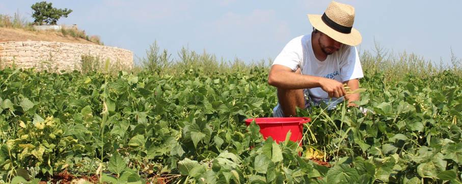 ingénieur agronome